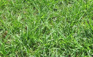 芝生の歴史